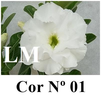 COR 01 (3) LM