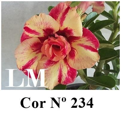 COR Nº 234 (2) LM