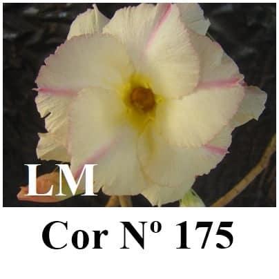Cor Nº 175 LM