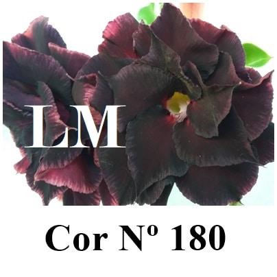 Cor Nº 180 (2) LM