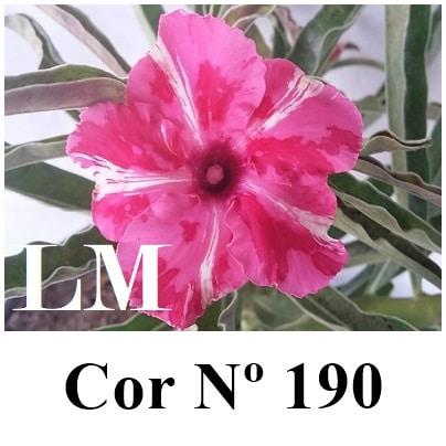 Cor Nº 190 LM
