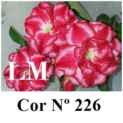 Cor Nº 226 (4) LM