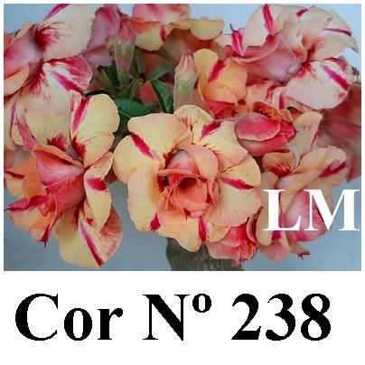 Cor Nº 238 LM (2)