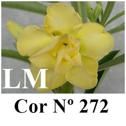 Cor Nº 272 (2) LM