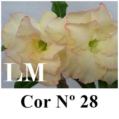 Cor Nº 28 (7) LM