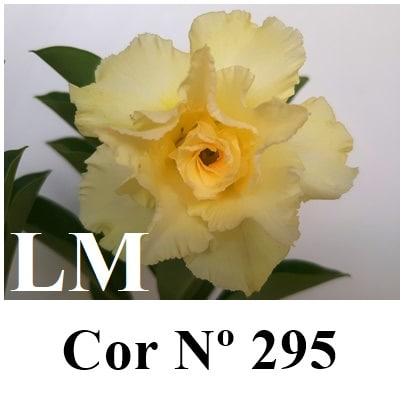Cor Nº 295 (2) LM