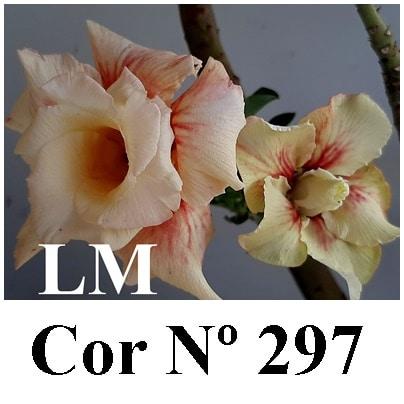 Cor Nº 297 (3) LM