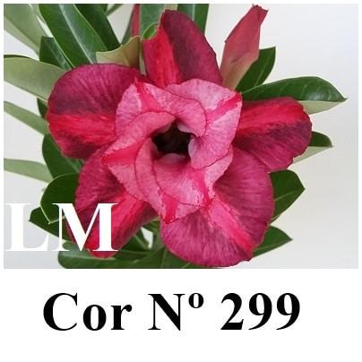 Cor Nº 299 (2) LM