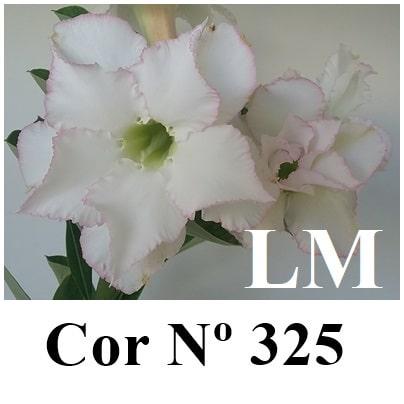 Cor Nº 325 (2) LM