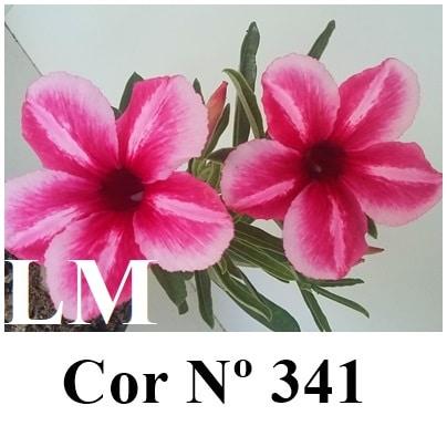 Cor Nº 341 (2) LM