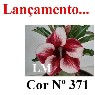 Cor Nº 371 (2) LM Lançamento