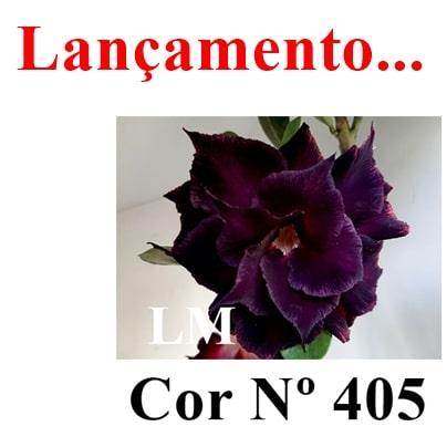 Cor Nº 405 LM Lançamento