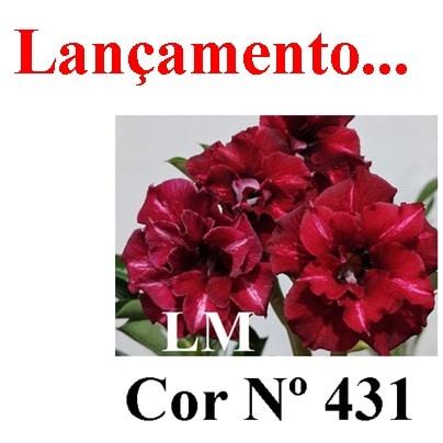 Cor Nº 431 LM Lançamento