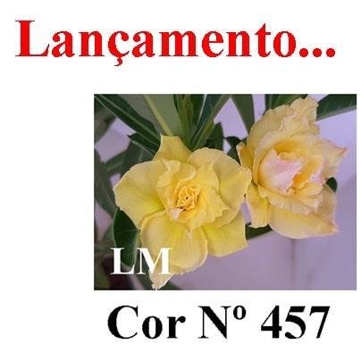 Cor Nº 457 LM Lançamento
