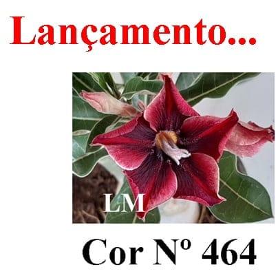 Cor Nº 464 LM Lançamento