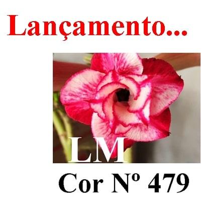 Cor Nº 479 LM Lançamento
