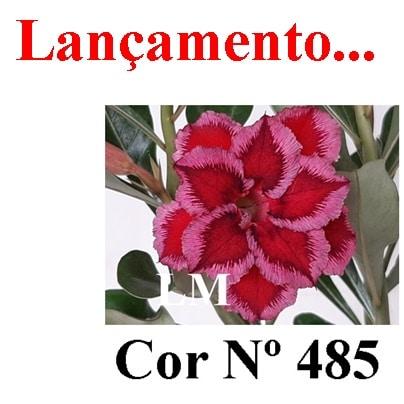 Cor Nº 485 (2) LM Lançamento