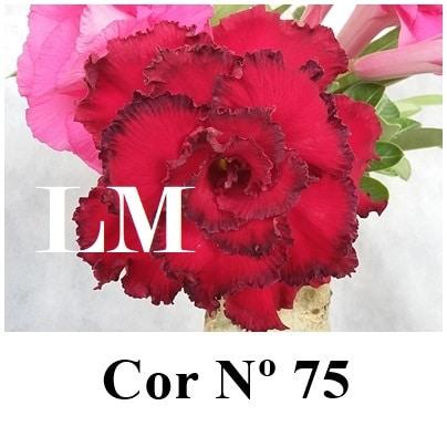 Cor Nº 75 (3) LM