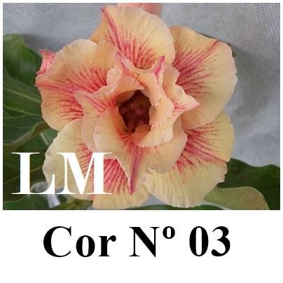 COR 03 (4) LM