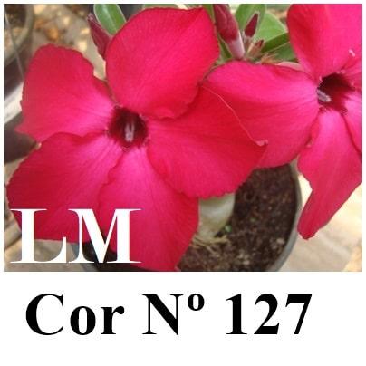 Cor Nº 127 (2) LM