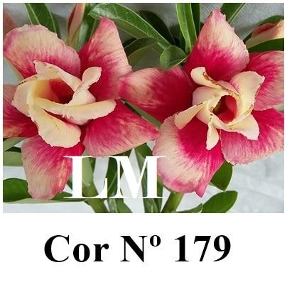 Cor Nº 179 (2) LM