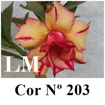 Cor Nº 203 (2) LM