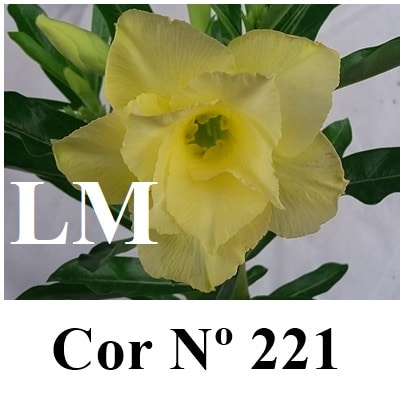 Cor Nº 221 (2) LM
