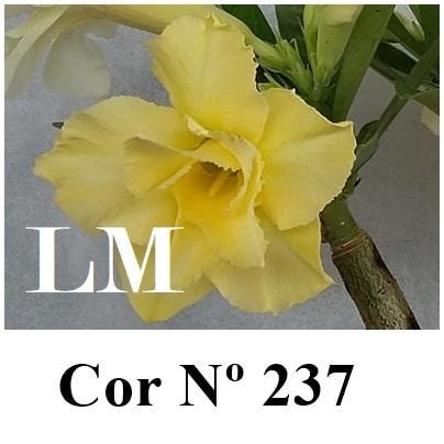 Cor Nº 237 (3) LM
