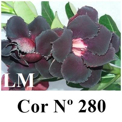 Cor Nº 280 (3) LM