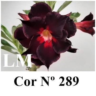 Cor Nº 289 (2) LM