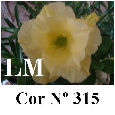 Cor Nº 315 LM