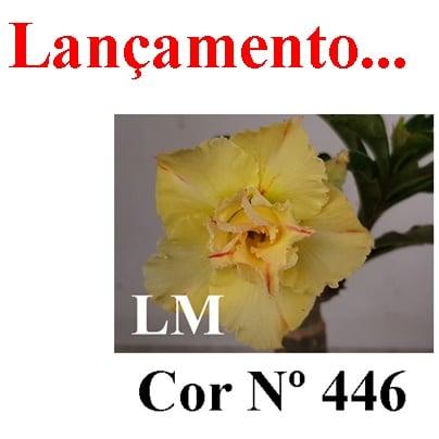 Cor Nº 446 LM Lançamento
