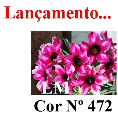 Cor Nº 472 LM Lançamento