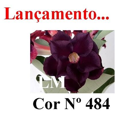 Cor Nº 484 LM Lançamento