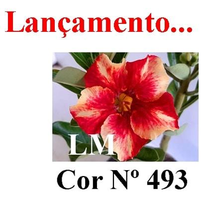 Cor Nº 493 LM Lançamento