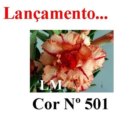 Cor Nº 501 (2) LM Lançamento