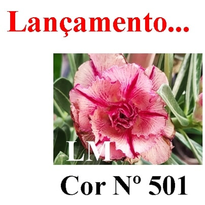 Cor Nº 501 LM Lançamento