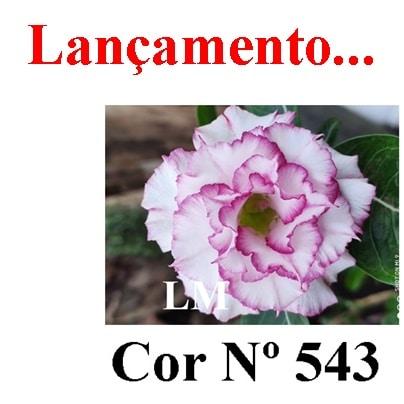 Cor Nº 543 LM Lançamento