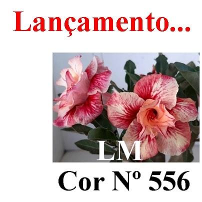 COR Nº 556 LM Lançamento