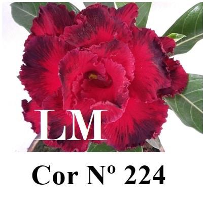 Cor Nº 224 (3) LM