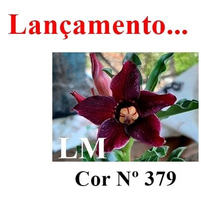 Cor Nº 379 LM lançamento