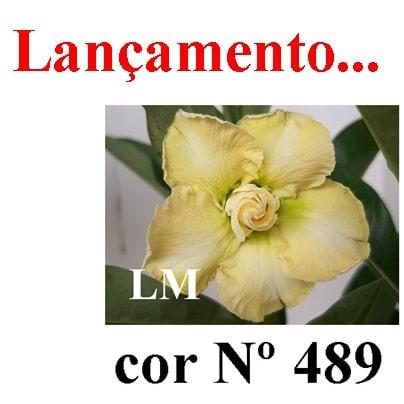 Cor Nº 489 LM Lançamento