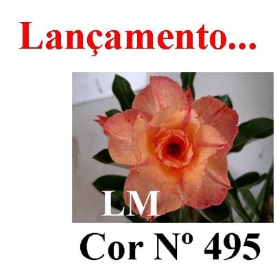 Cor Nº 495 (3) LM Lançamento