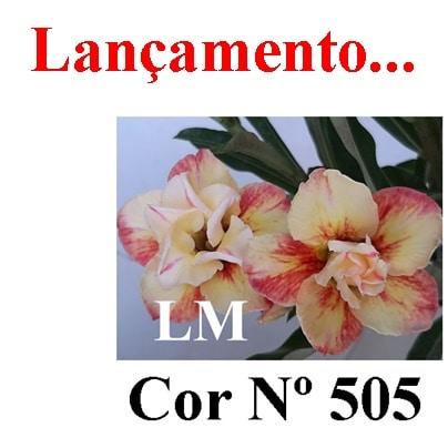 Cor Nº 505 (2) LM Lançamento