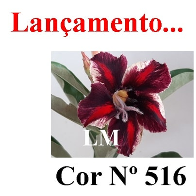 Cor Nº 516 LM Lançamento