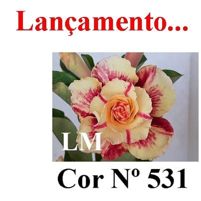 Cor Nº 531 LM Lançamento
