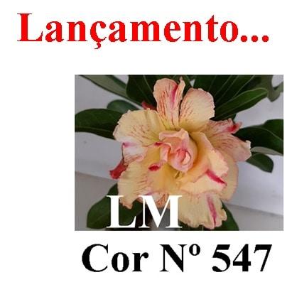 Cor Nº 547 (2) LM Lançamento