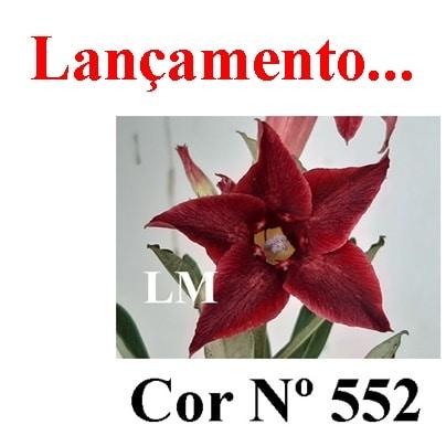 Cor Nº 552 (2) LM Lançamento
