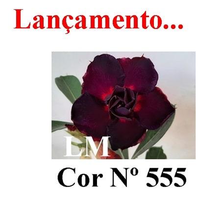 Cor Nº 555 LM Lançamento