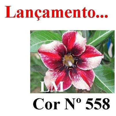 Cor Nº 558 LM Lançamento